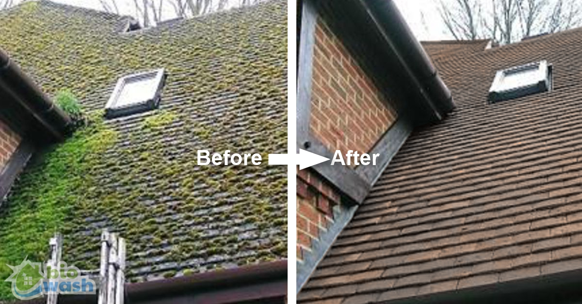 Roof Moss Removal 01